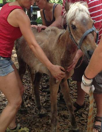 July Bucket Fund Mare:  Betsy Rose!  Click to donate and read her story!