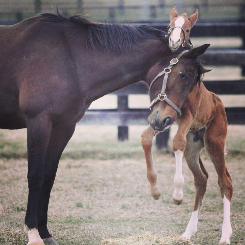 AWWWW!  I love foaling season!