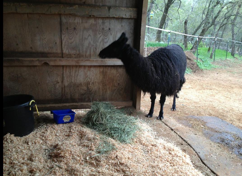 PLLL examines her new shelter.