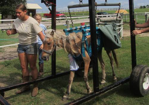 Betsy Rose, our July Bucket Fund Mare!  Click here to read her story and/or donate!