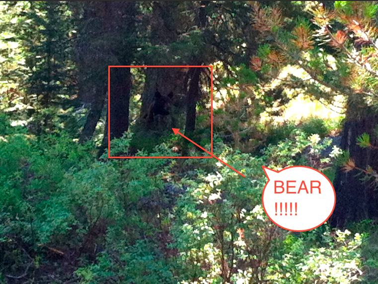 Yup.  A baby bear.  I was told he was right behind my cabin but I'm not sure if they were trying to scare me or if it was true.  I wanna know where Mama was hiding!