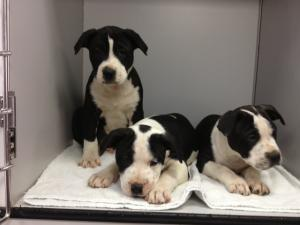 This set were at a shelter who actually got back to me - on Monday... but at least they returned my call!  However, they are not at the shelter, they are with a private party - a ways away.
