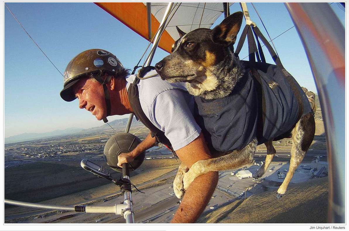 Dan McManus and his service dog, Shadow, hang-glide together outside Salt Lake City, Utah on July 22. The two have been flying together for about nine years with a specially made harness for Shadow.