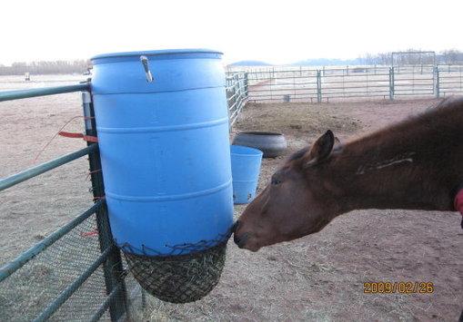 Slow Feeding Horse And Man