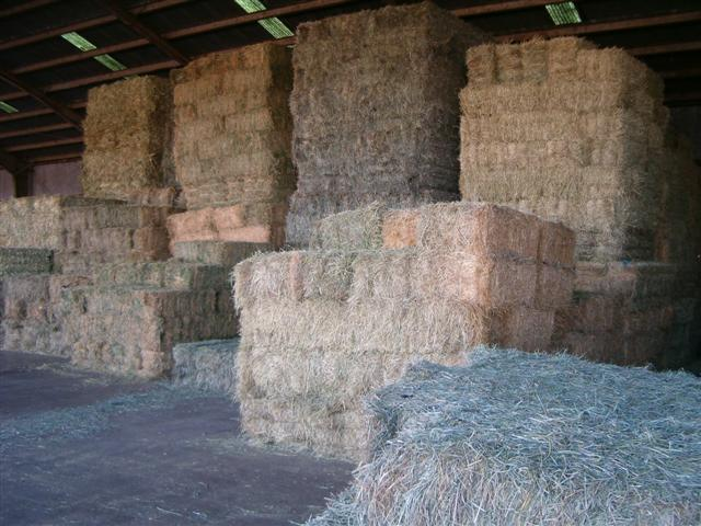 Why Hay Spontaneously Combusts And Ways To Prevent It
