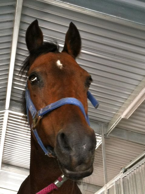 MT is our August Bucket Fund mare... Click here to read about her.