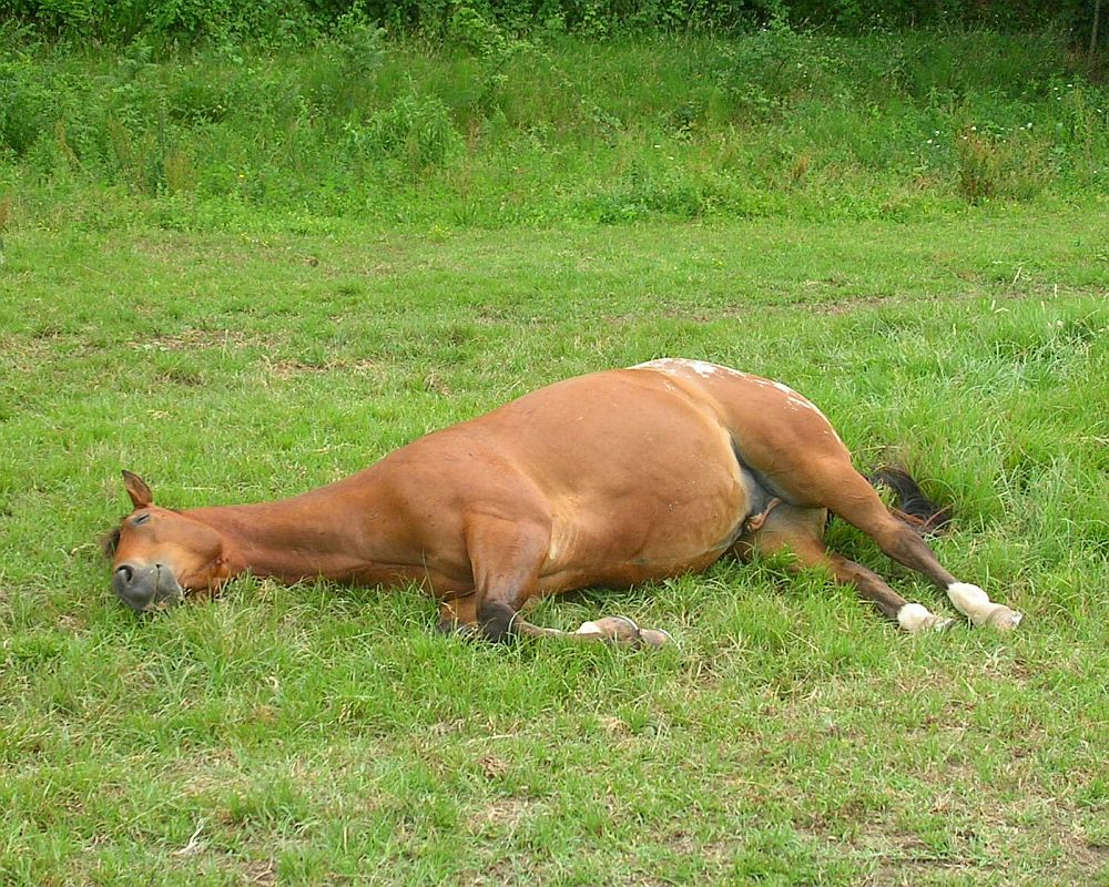 Let Sleeping Horses Lie Horse And Man