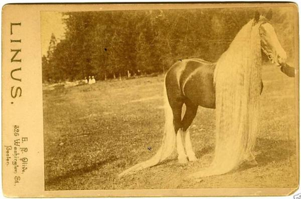 the horse with really long hair archives horse and man