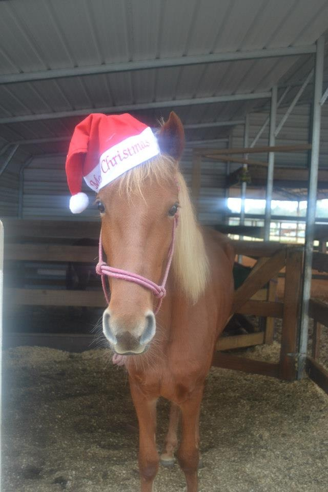 Lucky says that Christmas Donor Certs are still available!  Click image!