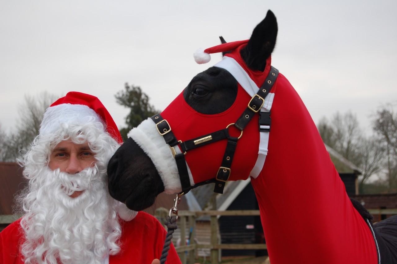 Santa Haws!