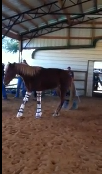 Click this image to see her first steps!  (Kinda scary at first but she does great!)