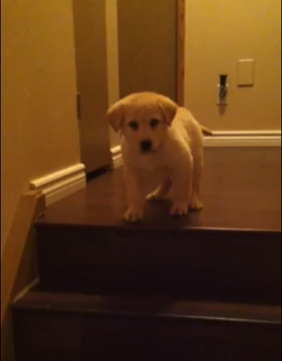 Click image to watch the sweetest video EVER.