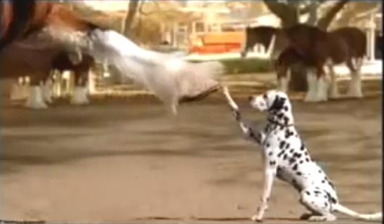Of course, the Budweiser Rocky spot... click image to view.