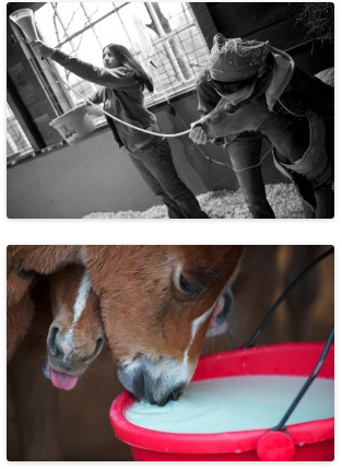 The Last Chance Corral is one of the Rescues who specializes in saving these foals.