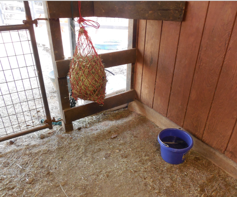 I have stashes of hay (in small holed nets) all over the barn so that she will walk.  By each hay net is a glass of water...