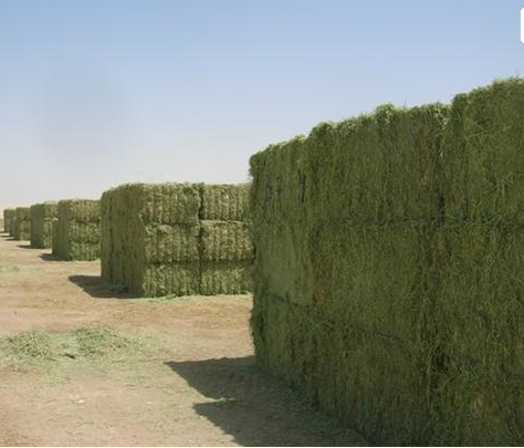 These are the Standlee hay stacks before they are compressed