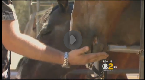 Buster was featured in a news story about Equine Therapy for PTSD patients.  Click image to watch the video.