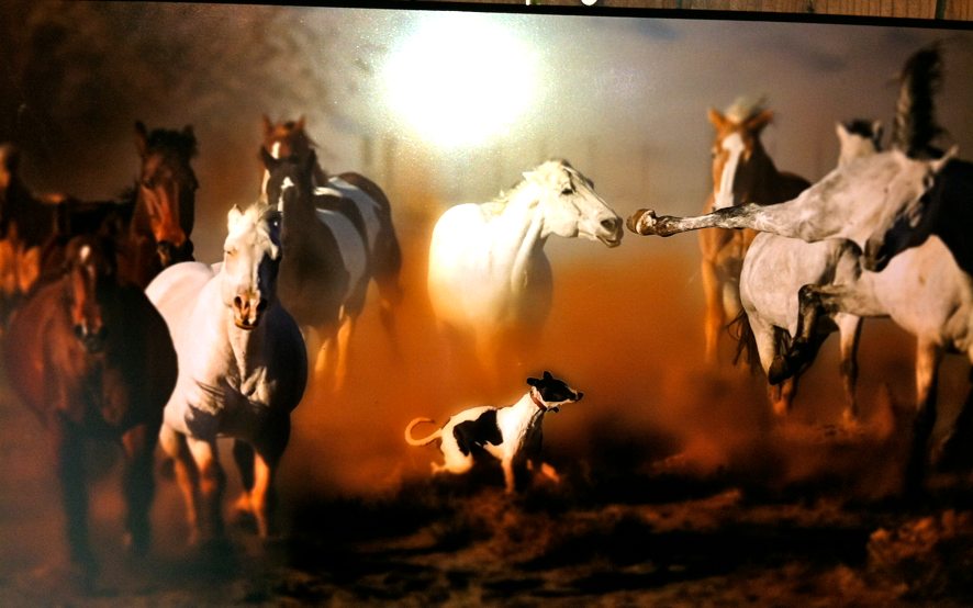 I saw this photo at the Horse Expo and I wish I knew who shot it... very cool!