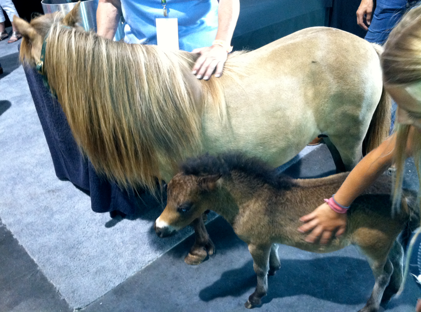 I saw these two at the Horse Expo last weekend.  The baby was sooooo tiny!  He looked like a stuffed animal!