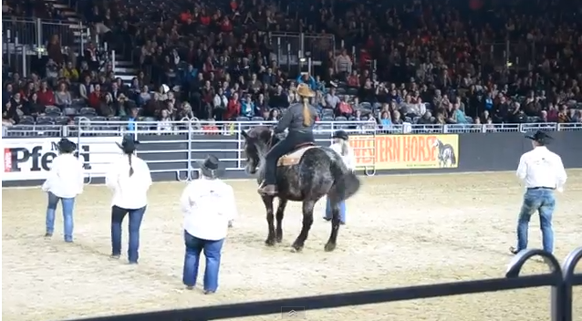 Click image to watch this amazing horse line-dance.