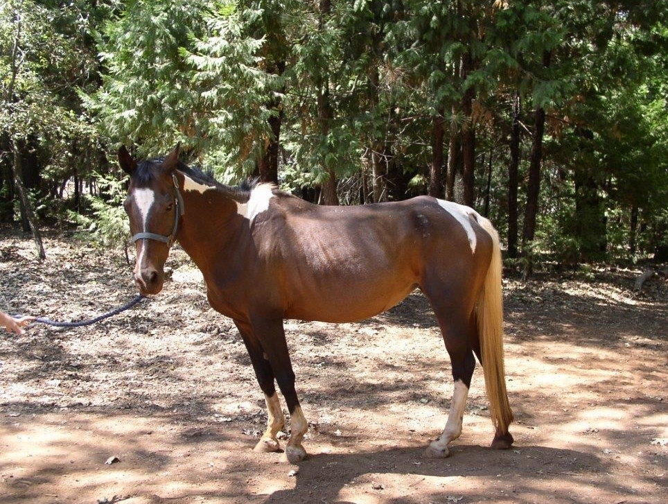 This is the happy ending mare...