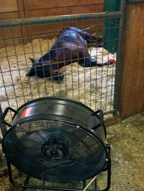 After all that exercise, she needed a nap in front of her fan.