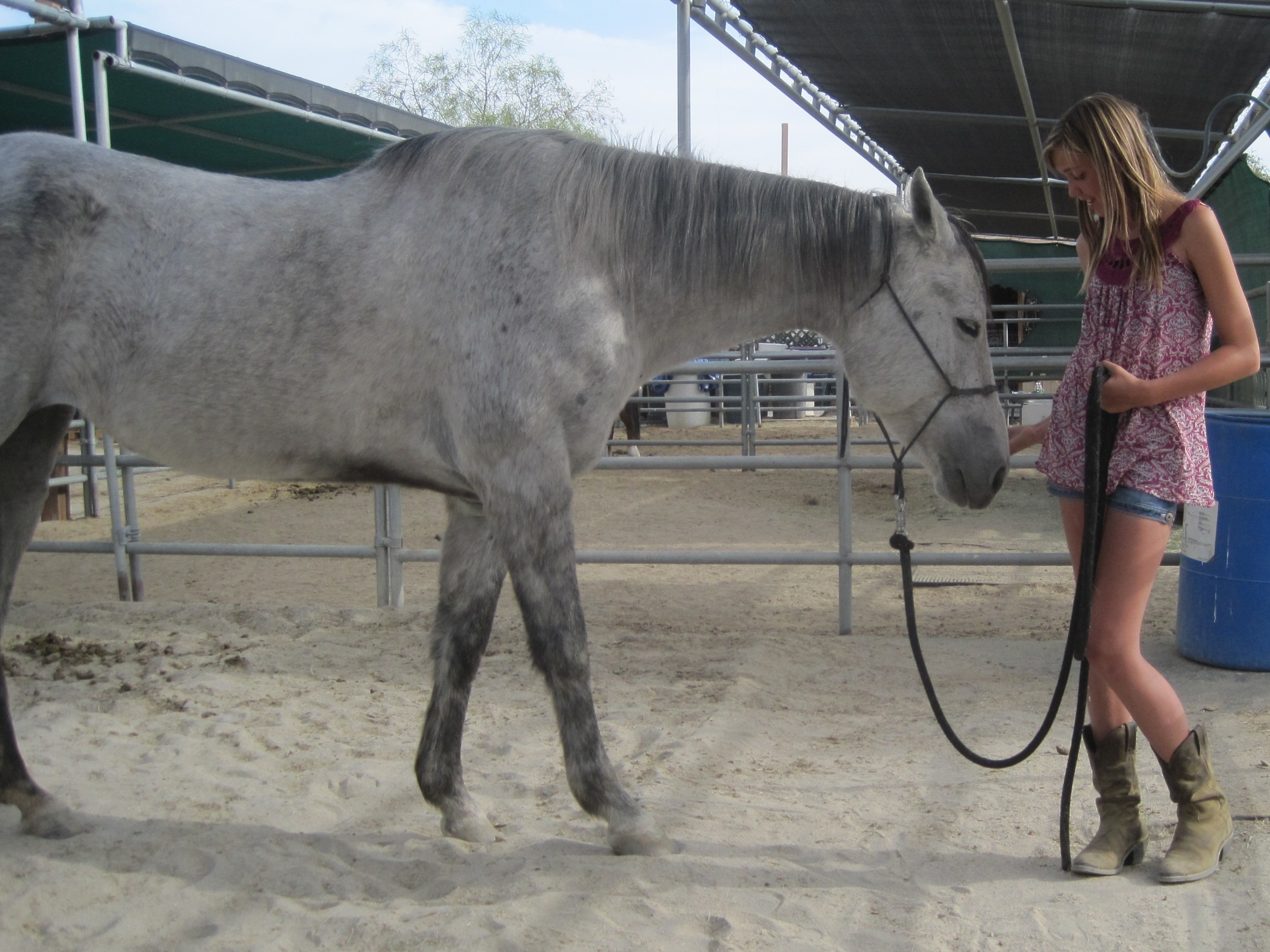 Sweet Storm, our May Bucket Fund mare who has a life-threatening infected wither.  Her surgery, thanks to you, is on Tuesday!