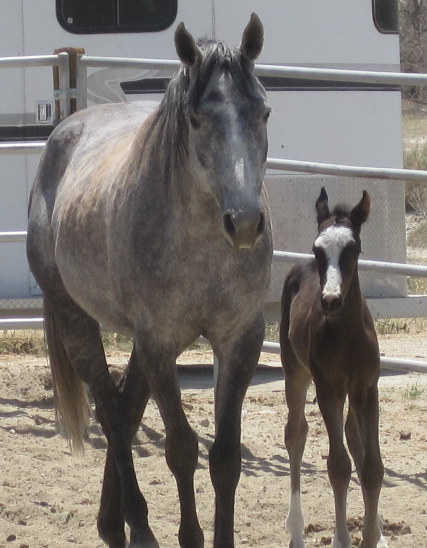 She had her very healthy colt, Thunder
