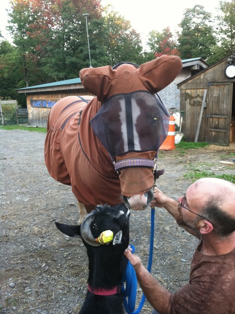 This Is The Reader S Horse Chance In His Boett Blanket Which Changed Life