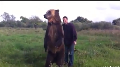 Click to watch this ebullient bear - and his man.