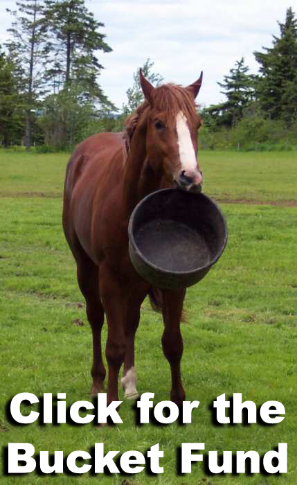 Click to help feed the well cared for and loved Drafts (and the mini, Cupcake) at Blue Star Equiculture! Click image to learn more!