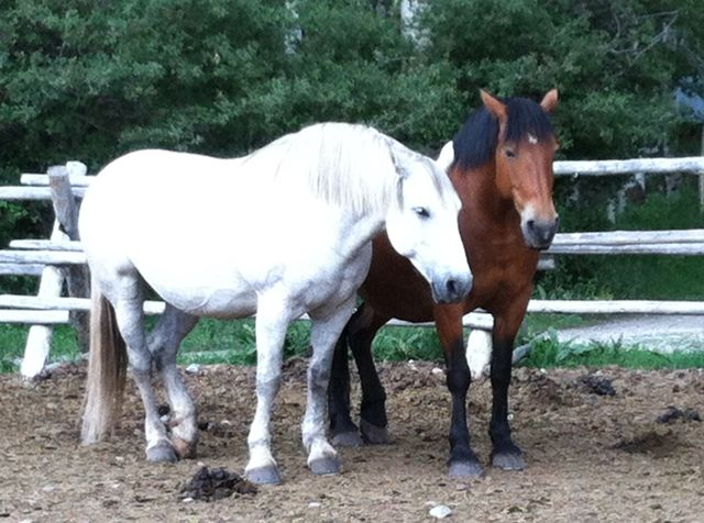 I snapped this of two of the horses - they seemed like really good friends.  As you can tell, they aren't starving...