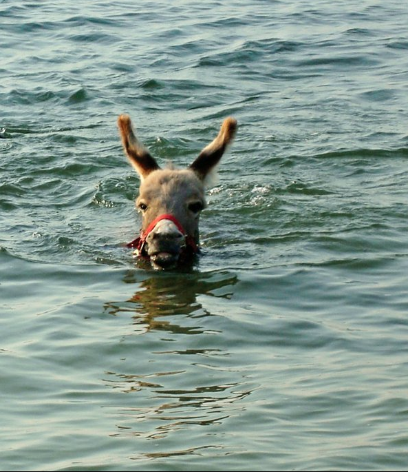 Can Dogs Swim In Savoy Mt State Park