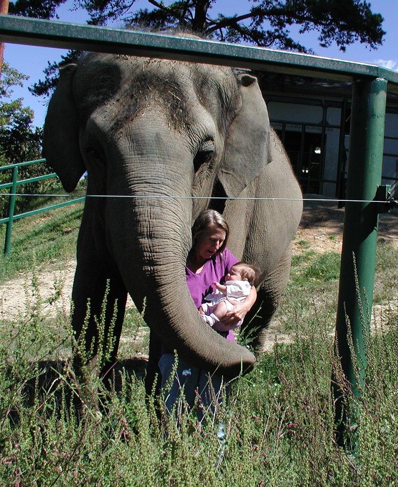 Bella the Elephant