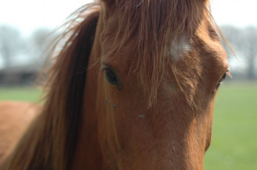 Do horses suffer PTSD?