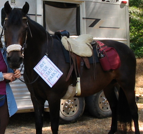 This is Gwen all tacked up on a special ride we did to help the CA State Parks.