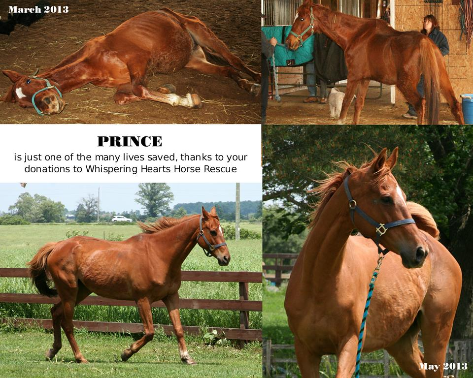 Prince!  Atta Boy!