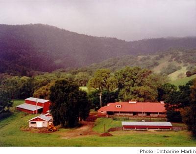 Ridgewood mare barn